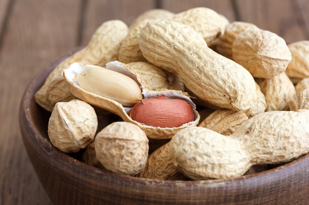 Foods That Can Cause Allergies In Dogs