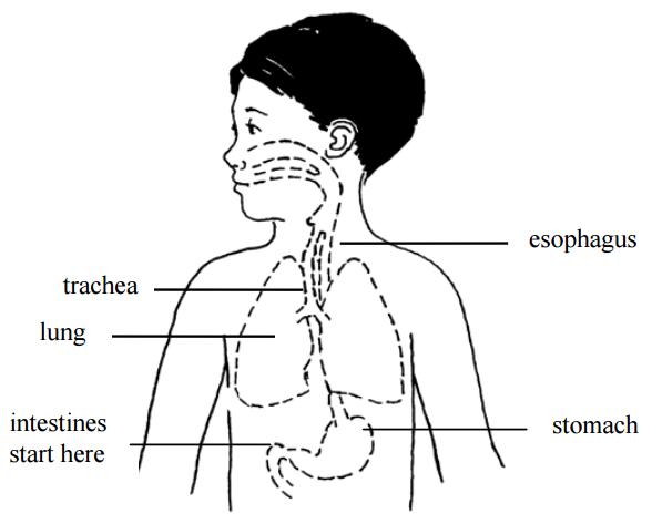 Nasogastric tube feeding | Children's Education Materials