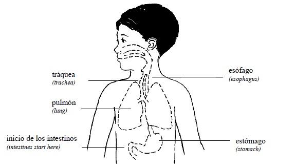 alimentacion nino sano pdf