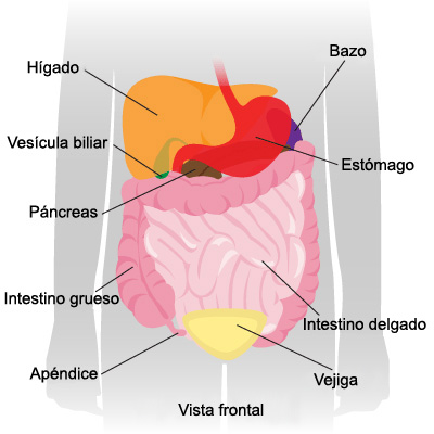 Ultrasonido abdomen